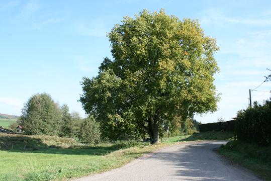 http://studiolada.fr/files/gimgs/93_2011urhadolgumenil-arbre.jpg